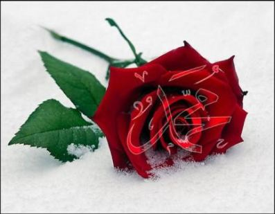 lfcnet_muhammed6se2.jpg